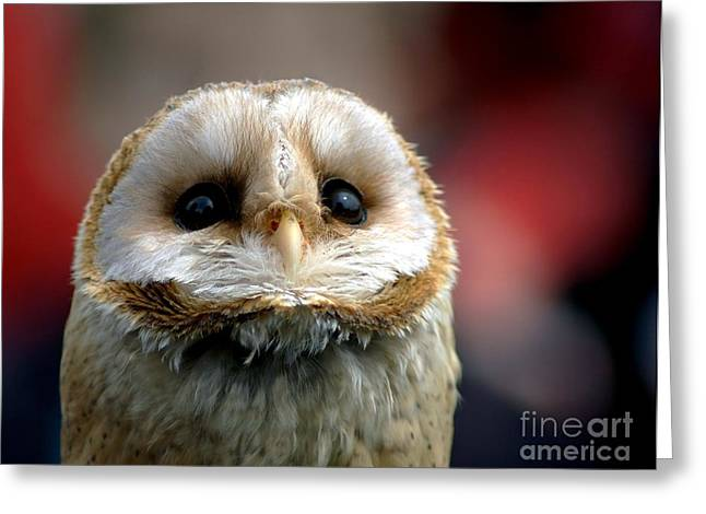 Owl Photographs Greeting Cards - Please  Greeting Card by Photodream Art