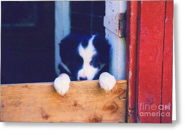 Collie Mixed Media Greeting Cards - Please Play With Me Greeting Card by Smilin Eyes  Treasures