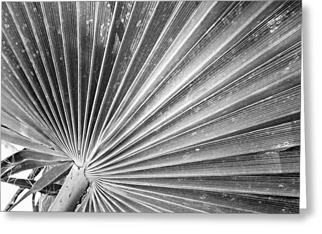 Pleated  Palm Greeting Card by ARTography by Pamela Smale Williams