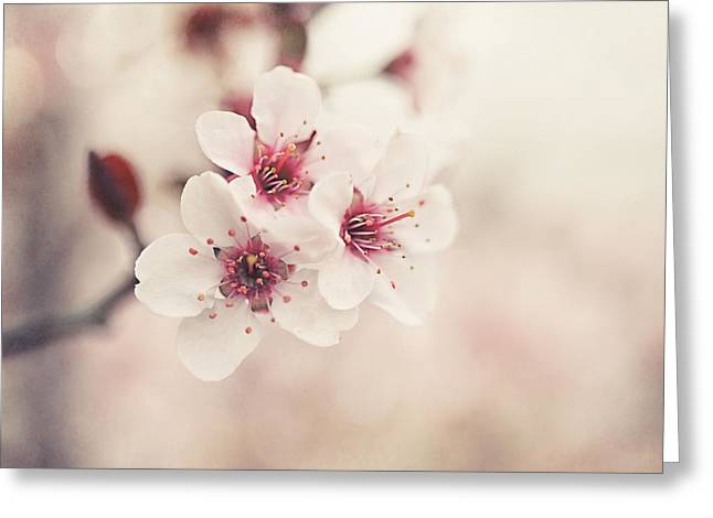 Dappled Light Greeting Cards - Plum Blossoms Greeting Card by Lisa Russo
