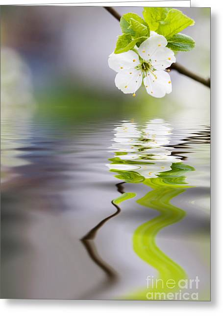 Background Greeting Cards - Plum tree blooming Greeting Card by Kati Molin