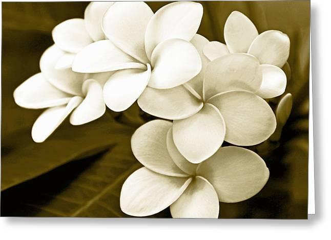 Kerri Ligatich Greeting Cards - Plumeria - Brown Tones Greeting Card by Kerri Ligatich