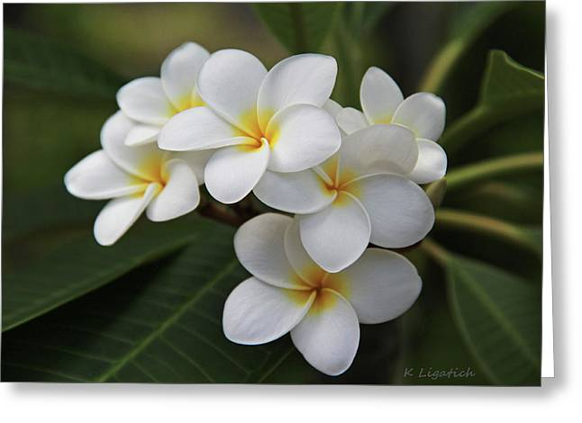 Tropical Flower Greeting Cards - Plumeria - Golden Hearts Greeting Card by Kerri Ligatich