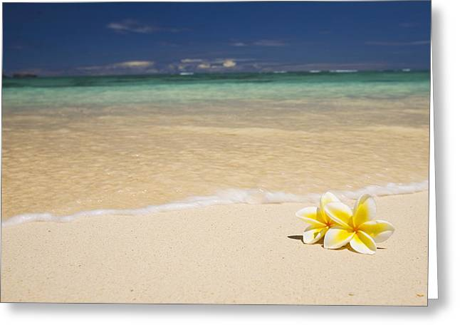 Island Cultural Art Greeting Cards - Plumeria Pair Greeting Card by Tomas del Amo - Printscapes
