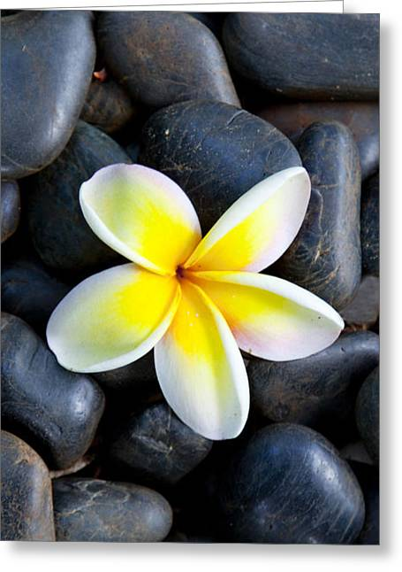 Plumeria Pebbles  - Part 2 Of 3 Greeting Card by Sean Davey
