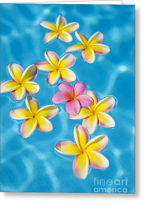 Plumerias In Pool Greeting Card by Ron Dahlquist - Printscapes