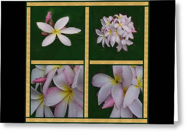 Enhanced Greeting Cards - Plumeria Quartet Greeting Card by Jacquie King