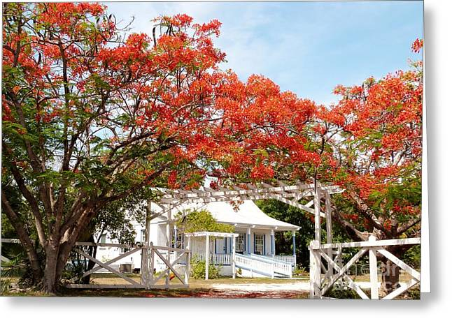 Poinciana Cottage Greeting Card by Amar Sheow