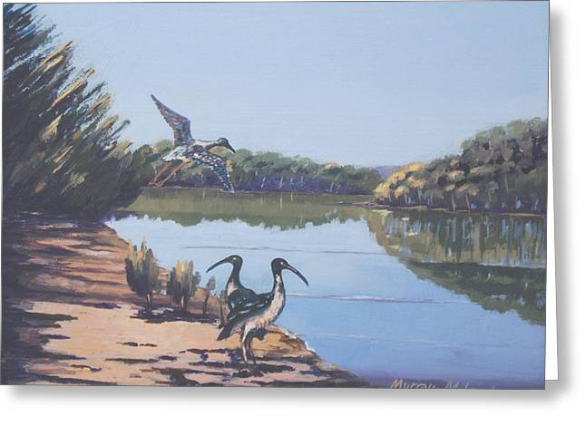 Murray Mcleod Paintings Greeting Cards - Point Clare Reflections 1 Greeting Card by Murray McLeod