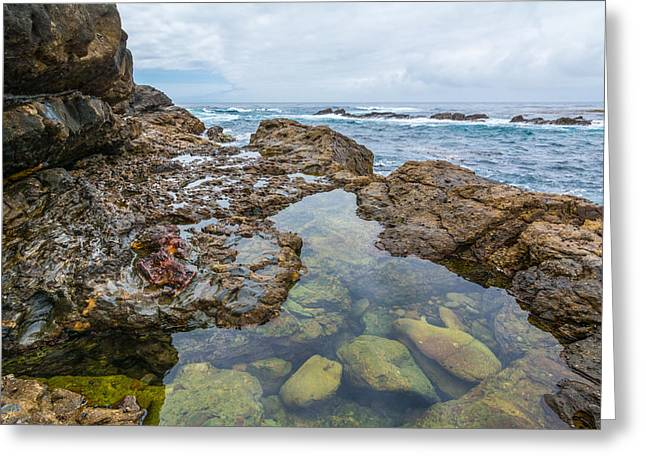 Point Lobos Reserve Greeting Cards - Point Lobos Greeting Card by Cristi Canepa