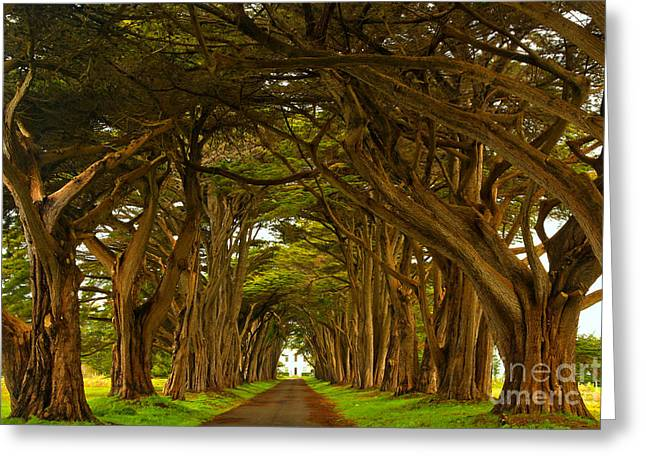 Point Reyes Cypress Tunnel Greeting Card by Adam Jewell
