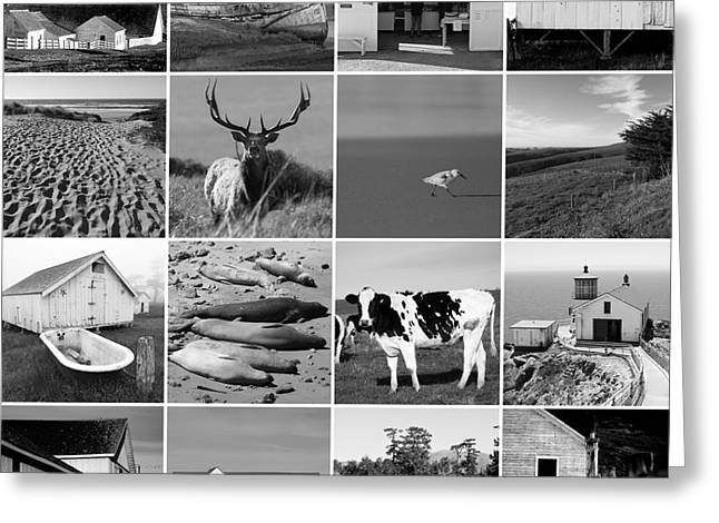 Home Decor Greeting Cards - Point Reyes National Seashore 20150102 bw Greeting Card by Home Decor