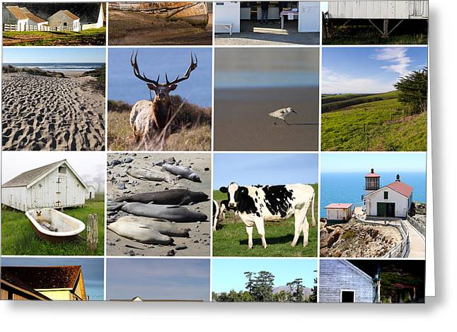 Home Decor Greeting Cards - Point Reyes National Seashore 20150102 Greeting Card by Home Decor