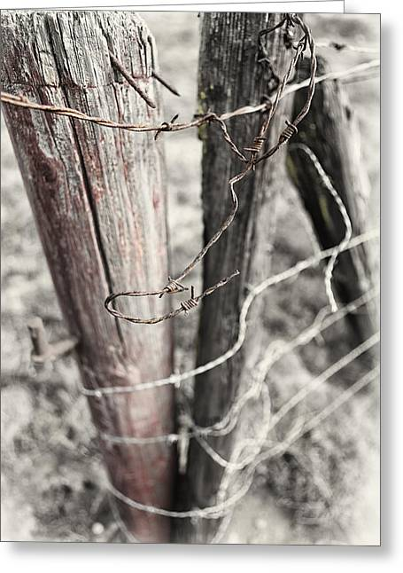 Barbed Wire Fences Greeting Cards - Points and Posts Greeting Card by Caitlyn  Grasso