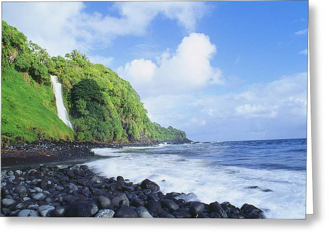 Tropical Vegetation Greeting Cards - Pokupupu Point Greeting Card by Peter French - Printscapes