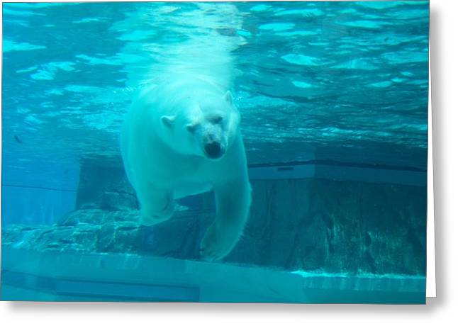Brianna Greeting Cards - Polar Bear Coming at You Greeting Card by Brianna Thompson