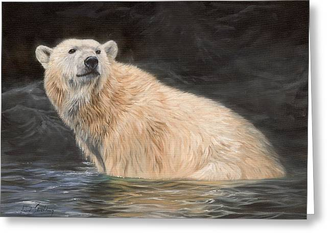 Nature Greeting Cards - Polar Bear Greeting Card by David Stribbling