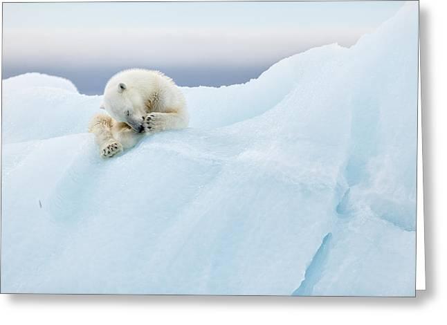Polar Bear Grooming Greeting Card by Joan Gil Raga