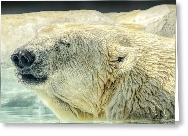 Zoology Greeting Cards - Polar Bear Greeting Card by LeeAnn McLaneGoetz McLaneGoetzStudioLLCcom