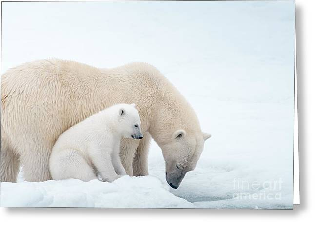 Love The Animal Greeting Cards - Polar Bear Mom and Cub Greeting Card by Paulette Sinclair