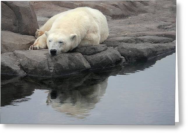 Dangerous In Winter Greeting Cards - Polar Bear Reflecting Greeting Card by Mike and Angela Murdock