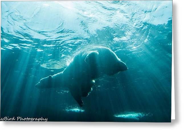 Pittsburgh Zoo Greeting Cards - Polar Bear Swim Greeting Card by Megan Miller