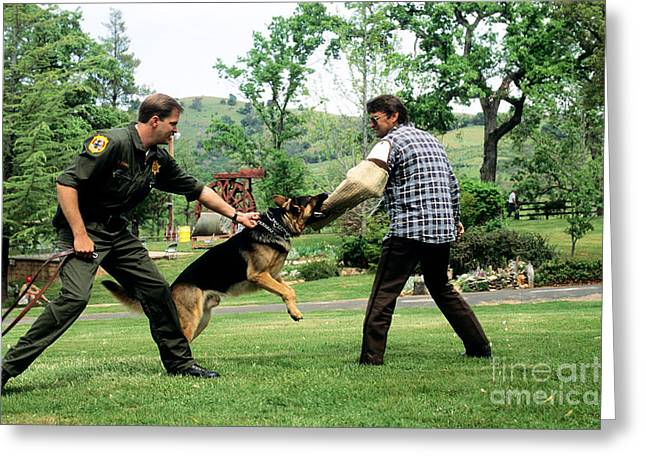 Police Officer Greeting Cards - Police Dog Training Greeting Card by Inga Spence