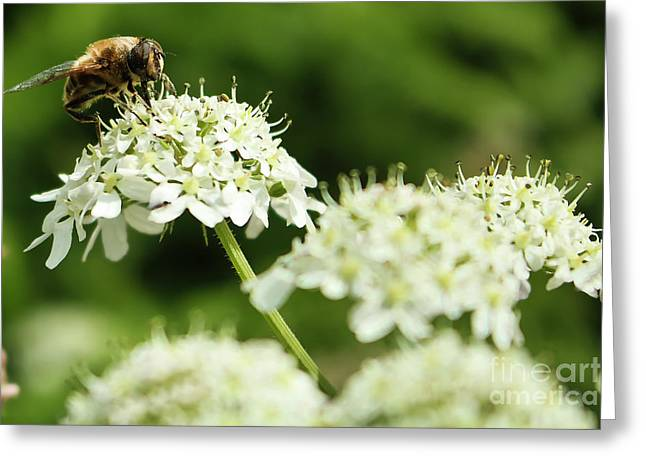 Pollinating Greeting Card by Terri Waters