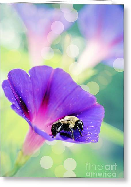 Kelly Greeting Cards - Pollinating the Glories Greeting Card by Kelly Nowak