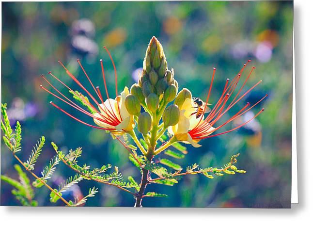 Biology Greeting Cards - Pollination Greeting Card by Ram Vasudev