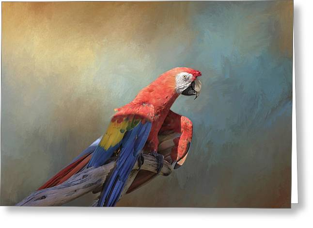 Macaw Profile Greeting Cards - Polly Want a Cracker Greeting Card by Kim Hojnacki