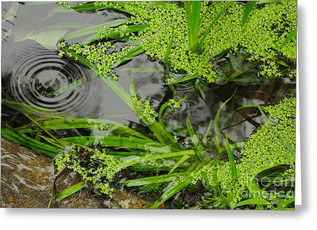 Algae Greeting Cards - Pond Abstract I Greeting Card by Merrimon Crawford