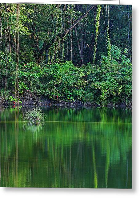 Pond Framed Prints Greeting Cards - Pond- Choc Bay-St Lucia Greeting Card by Chester Williams