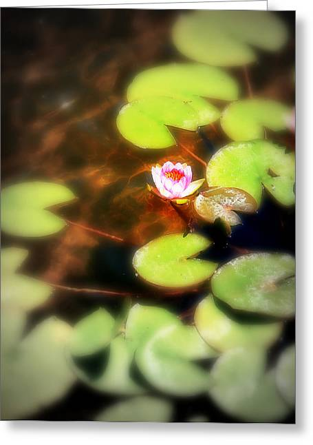 Lilly Pads Greeting Cards - Pond Flower Greeting Card by Perry Webster
