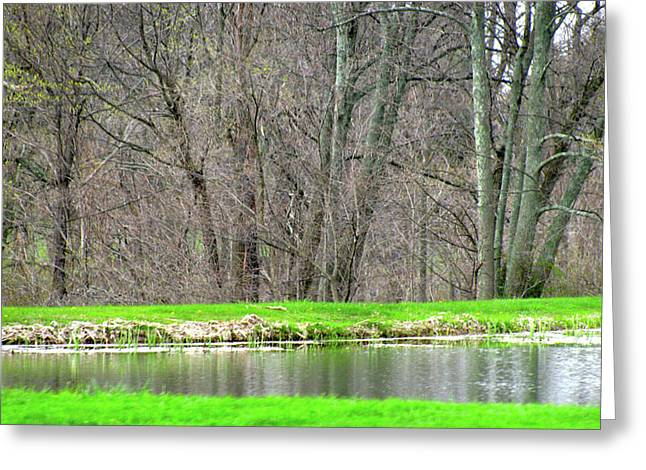 Sweep Of The Land Greeting Cards - Pond Starts To Grow Greeting Card by Debra     Vatalaro