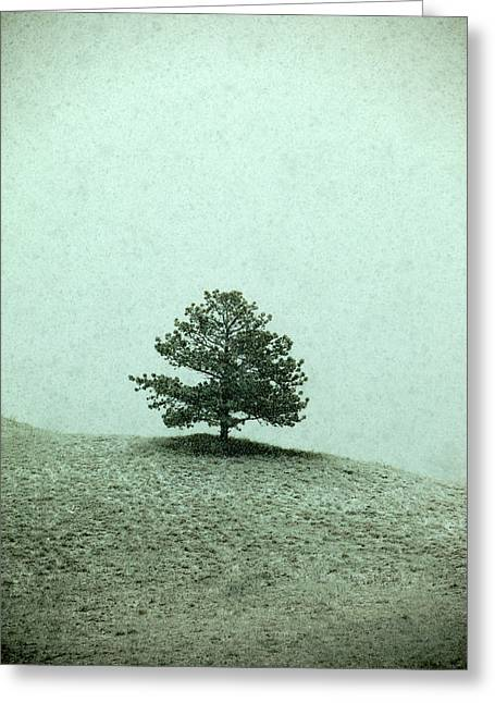 Ponderosa Pine Greeting Card by Todd Klassy