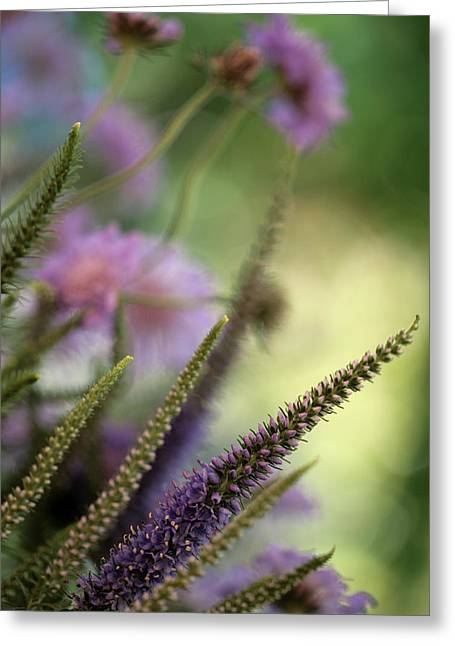 Setting Framed Prints Greeting Cards - Pondside Greeting Card by Bonnie Bruno