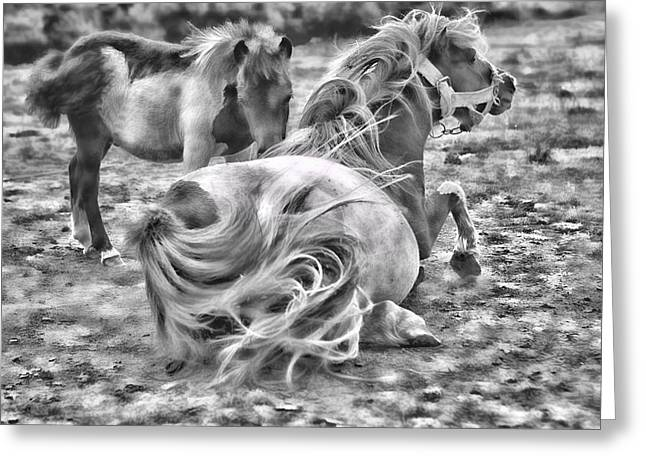 Ponies Greeting Card by Contemporary  Art