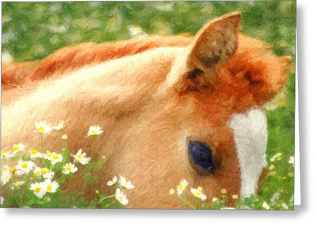 Pony In The Poppies Greeting Card by Tom Mc Nemar