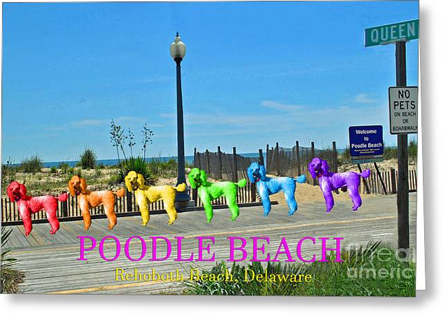 Lady Washington Greeting Cards - Poodle Beach Rehoboth Greeting Card by Jost Houk