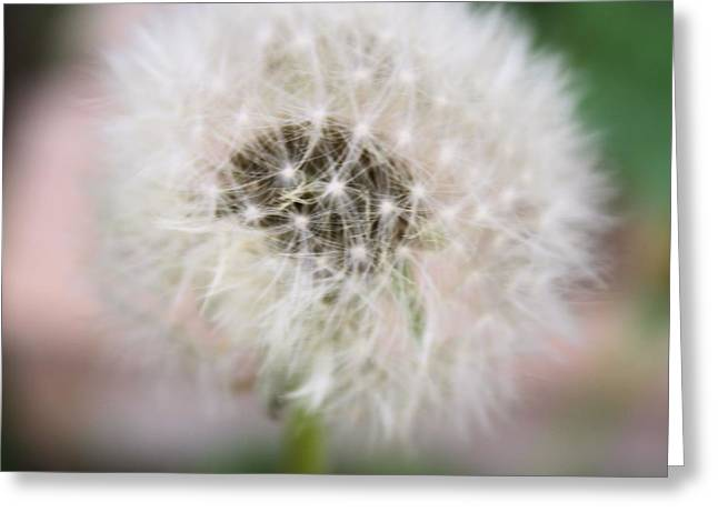 Poof Greeting Card by Lynnette Johns