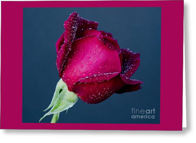 Bloosom Photographs Greeting Cards - Pour Some Sugar On Me Greeting Card by Nick  Boren