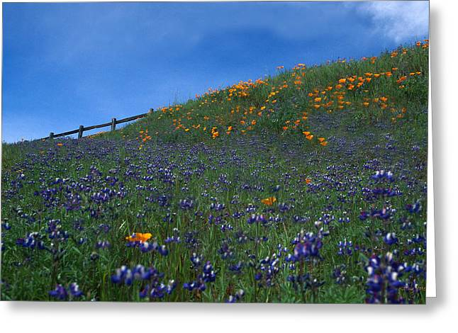 Open Space Preserves Greeting Cards - Poppies and Lupine on the Fence Greeting Card by Kathy Yates