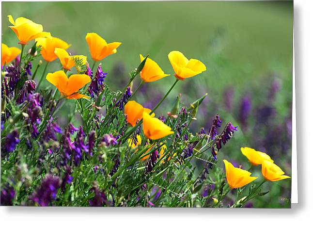 Vetch Greeting Cards - Poppies and Purple Vetch Greeting Card by Kathy Yates
