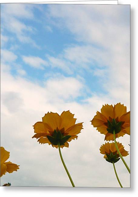 Flowers Against The Sky Greeting Cards - Poppies At Staats Lake Greeting Card by Katherine Adams