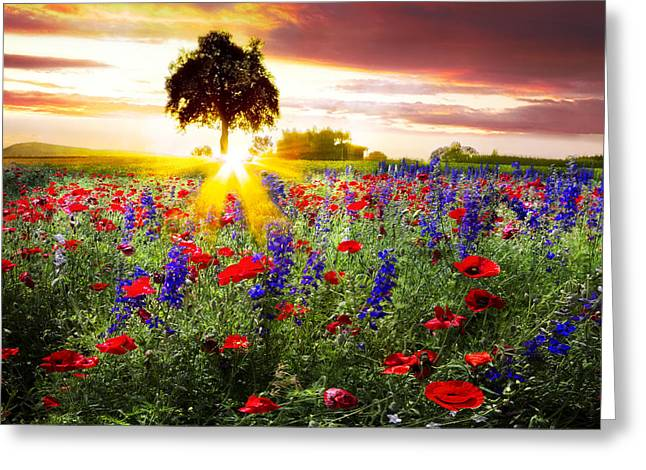 Farmers Field Greeting Cards - Poppies at Sunset Greeting Card by Debra and Dave Vanderlaan