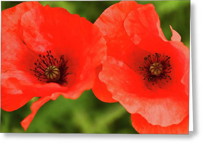 Abstract Digital Art Greeting Cards - Poppies  Greeting Card by Mihaela Pater