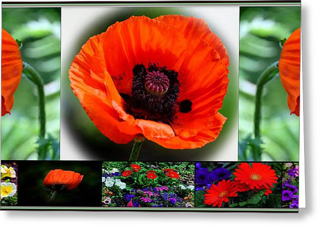 Floral Digital Art Digital Art Greeting Cards - Poppy Collage  Greeting Card by Constance Lowery
