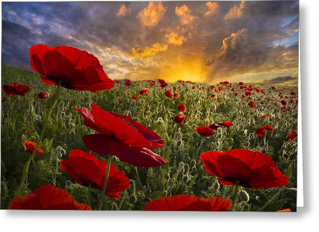Foggy. Mist Greeting Cards - Poppy Field Greeting Card by Debra and Dave Vanderlaan