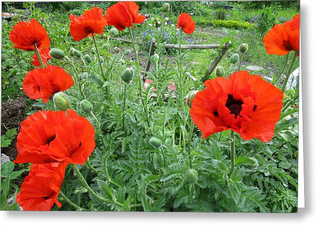 Capsule Greeting Cards - Poppy Field Greeting Card by Rosita Larsson